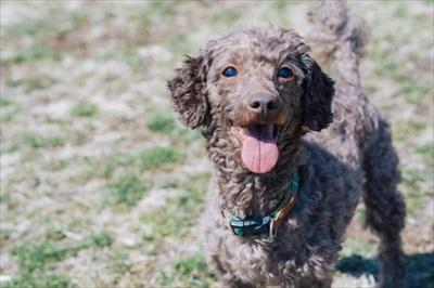 アイコンタクトのしつけ・噛み癖矯正など犬のトレーニングを西宮や芦屋でプロに依頼するなら
