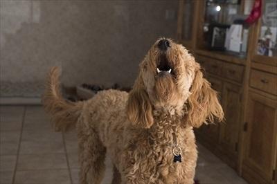 噛み癖・吠える癖など犬をしつける上での悩みの種を解決するには
