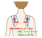 肩甲骨の位置を示したイラストです