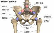 骨盤に集まる上半身と下半身の力を表したイラストです