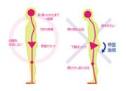 背骨のバランスを示したイラストです