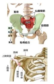 整体する骨格のイメージイラストです