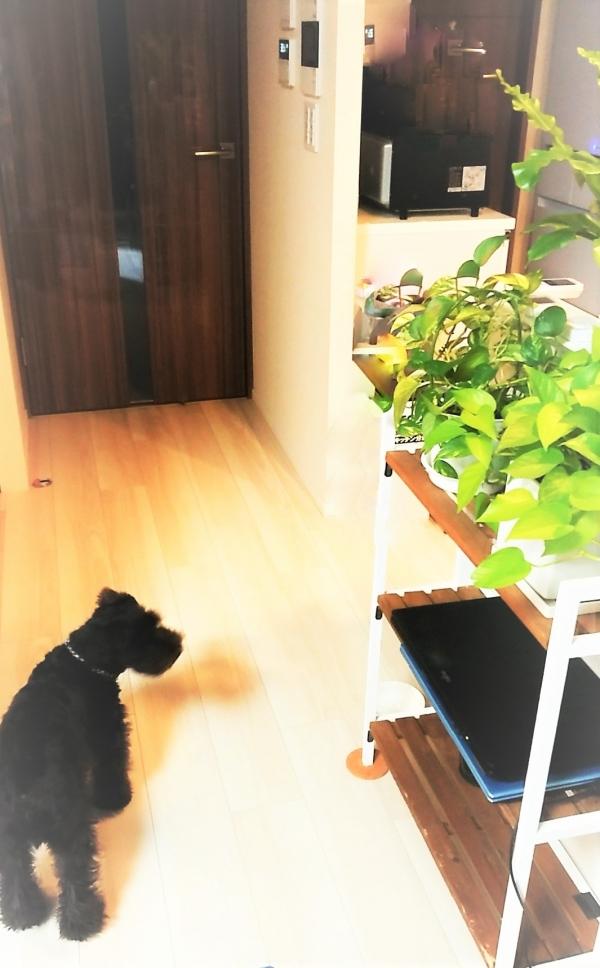 スピリチュアルカウンセリング サロン犬 画像